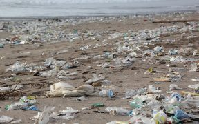Future Green Verbot Plastik