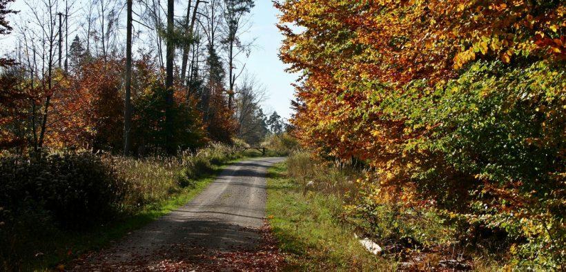 Nachhaltige Freizeitmöglichkeiten - Ein Spaziergang im Wald
