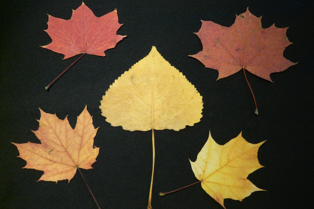 Basteln im Winter - Blätter