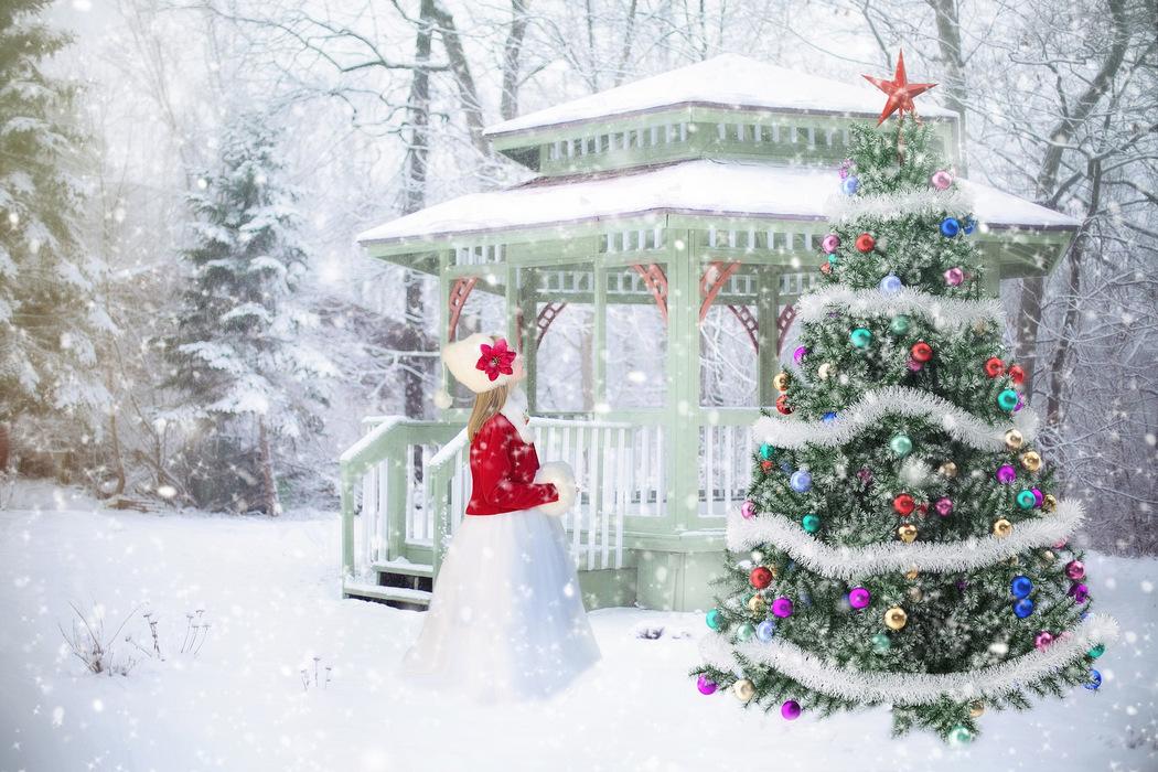 Weihnachtsbaum Tradition.Weihnachtsbaum Und Nachhaltigkeit Passt Das Zusammen