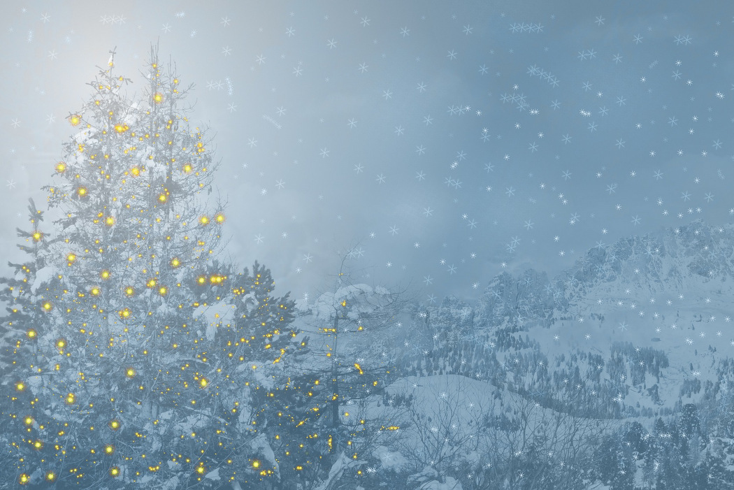 Am umweltfreundlichsten ist der Weihnachtsbaum in seiner natürlichen Umgebung.