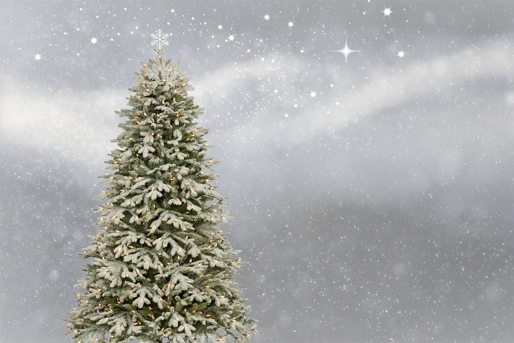 Der Weihnachtsbaum hat eine lange Geschichte