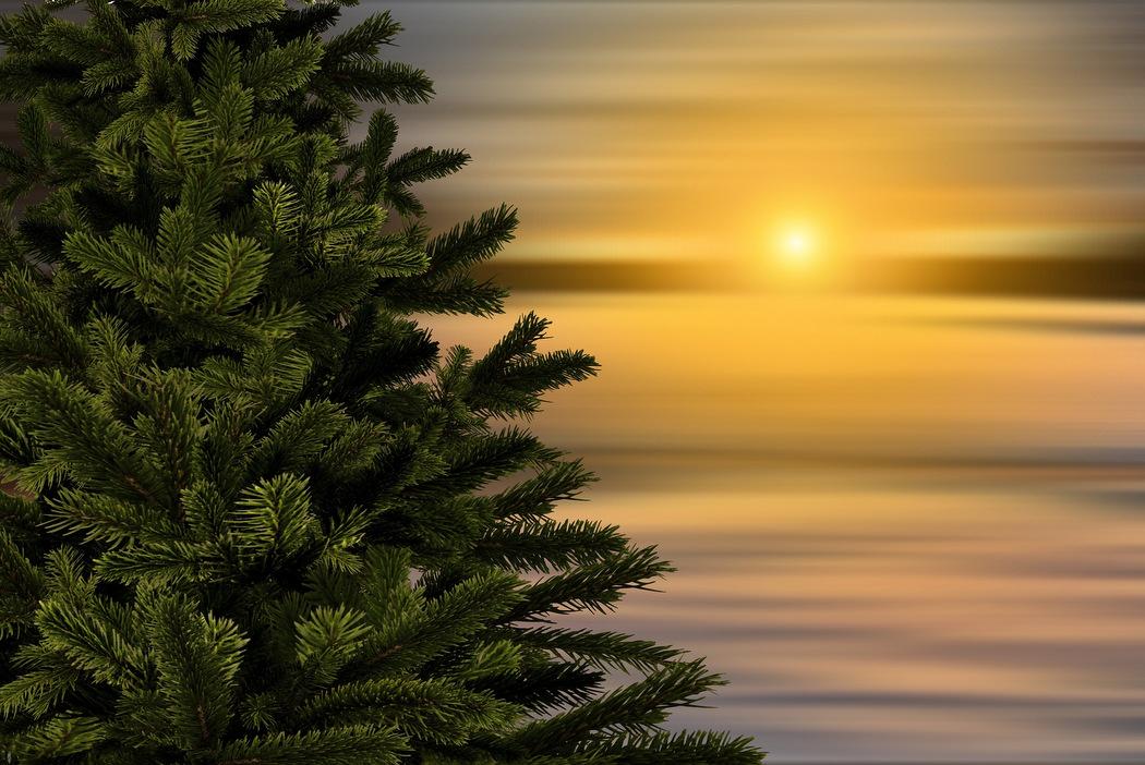 Der Weihnachtsbaum ist bereit zum Schmücken