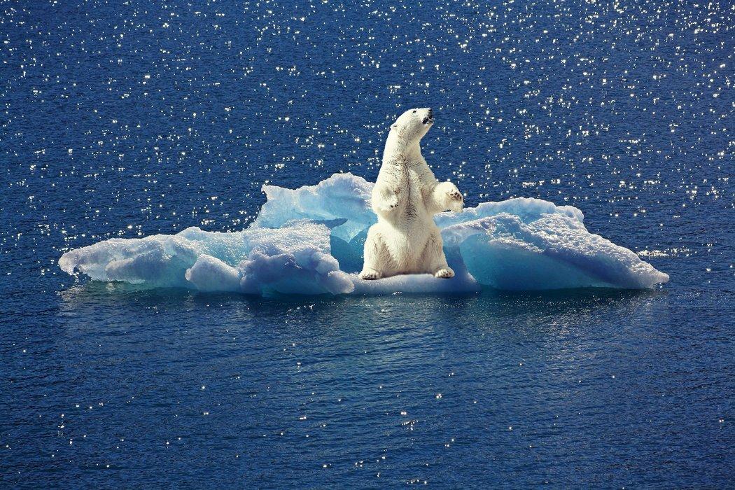 Klimaziele verfehlt - Der Eisbär ist von den FOlgen des Klimawandels bedroht