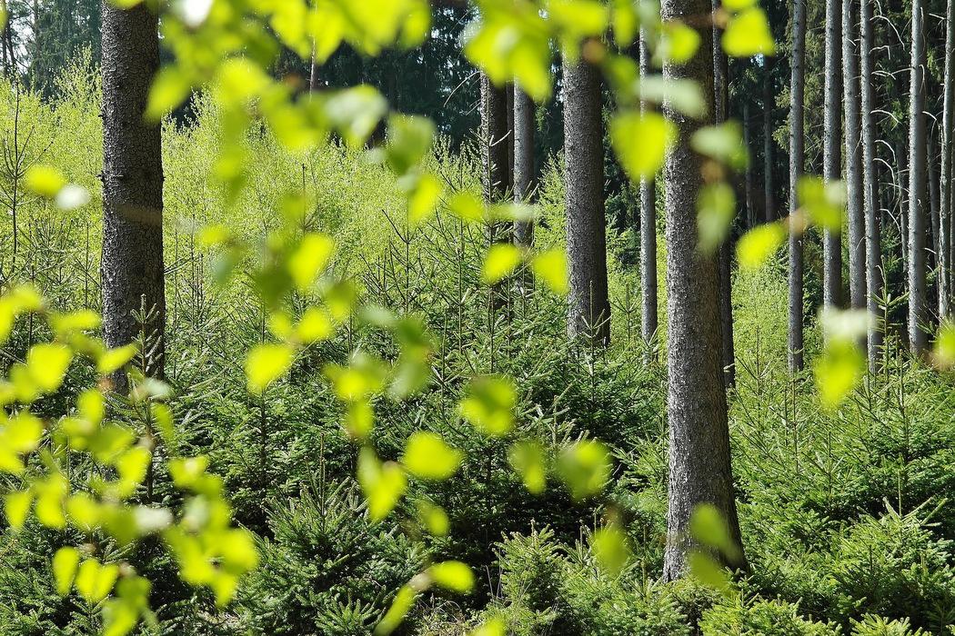EMAS - Weniger Emissionen schützen die Umwelt