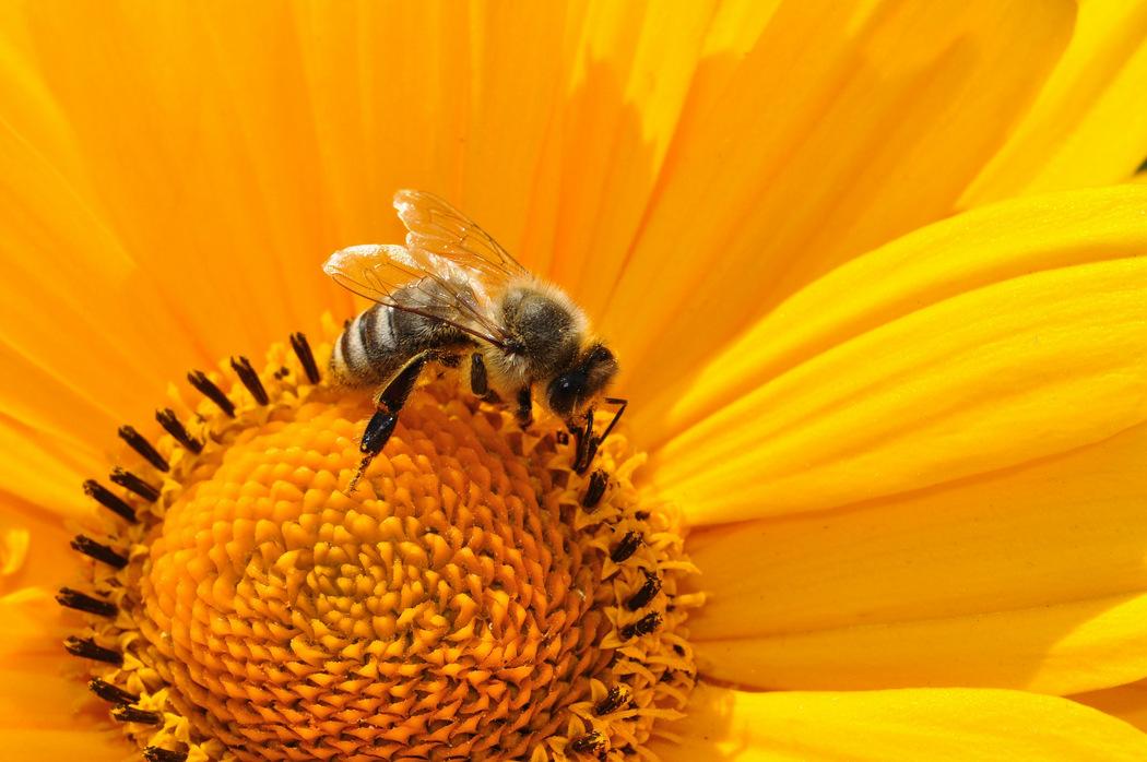 Artenschutz in Bayern - Kampf gegen das Bienensterben