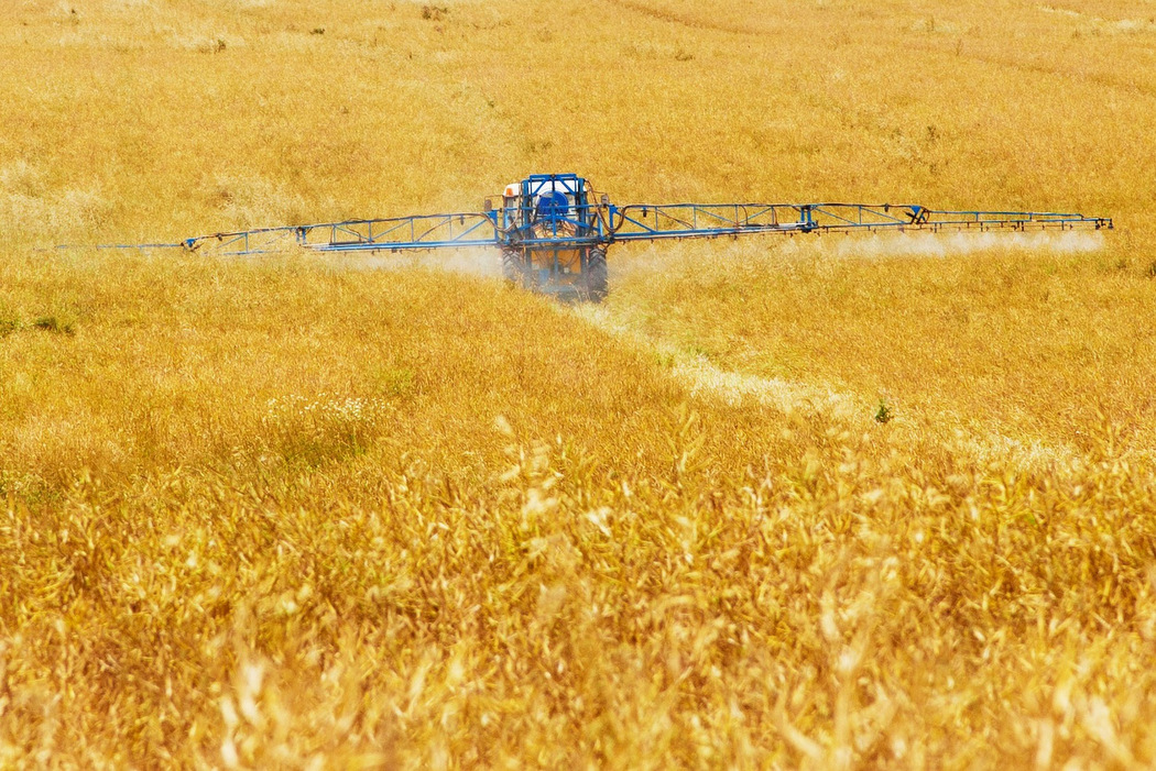 Ursache für das Bienensterben - Chemische Landwirtschaft