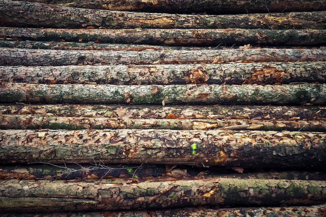 Umweltfreundliches Putzmittel - Palmöl-Tenside vermeiden
