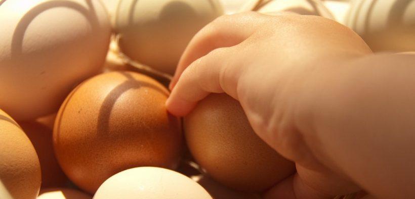 Bio-Eier für ein nachhaltiges Osterfest
