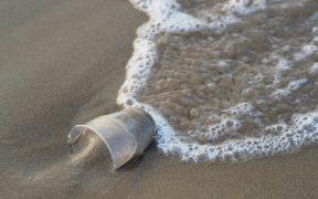 Mikroplastik - mikroskopisch kleine Gefahr