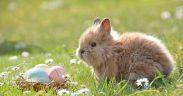 Ostereier natürlich färben - Nachhaltige Deko zu Ostern