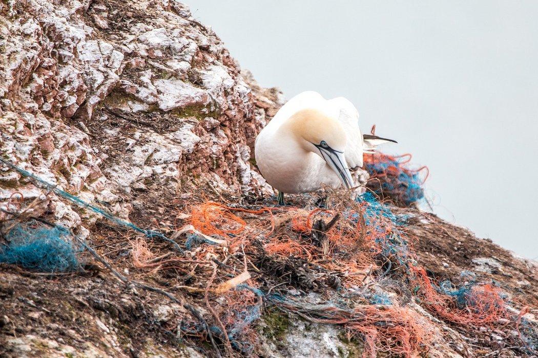 Plastikinseln - tödliche Gefahr für Seevögel