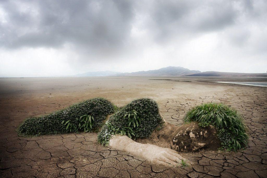 Wüste Mensch Pflanze