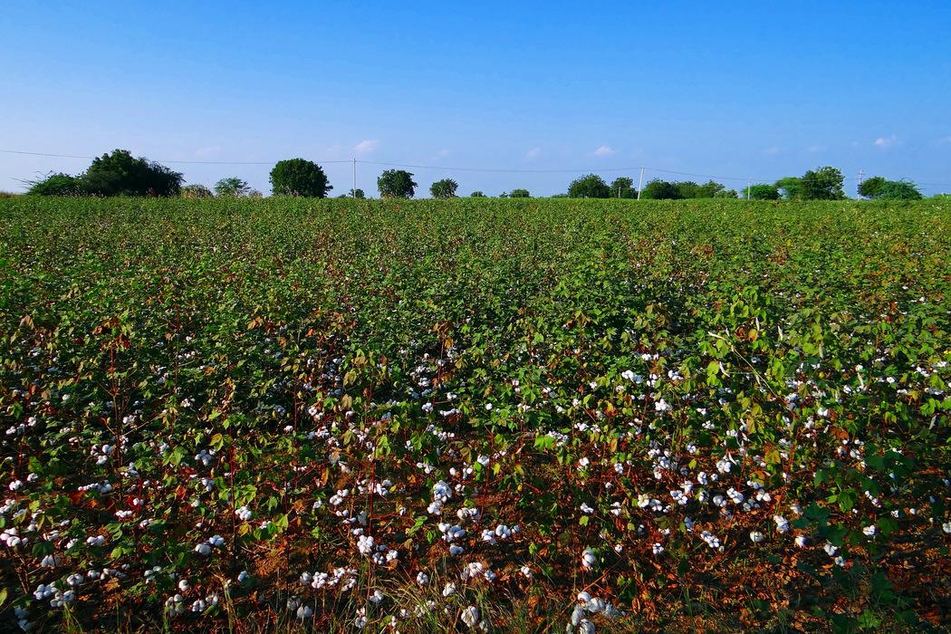 Der Grüne Knopf garantiert Verbrauchern soziale und nachhaltige Produktionsmethoden