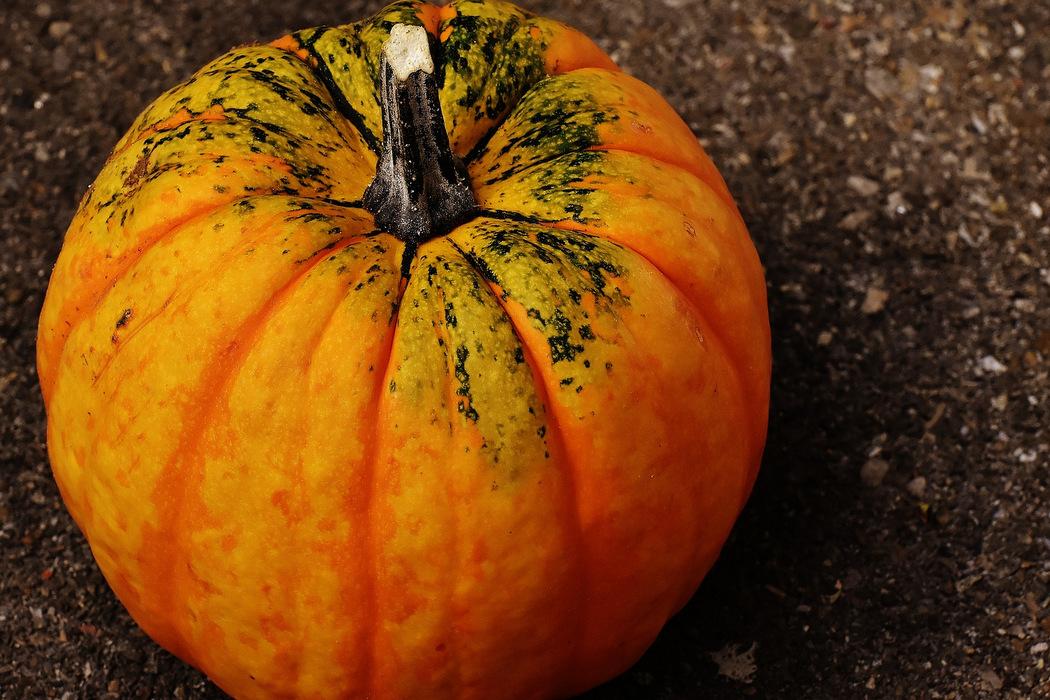 Herbstgemüse - Kürbis