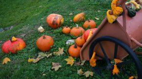 Herbstgemüse - Kürbisse
