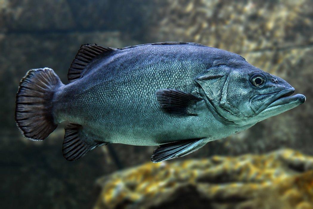 Überfischung - Diese Fischarten sind bedroht
